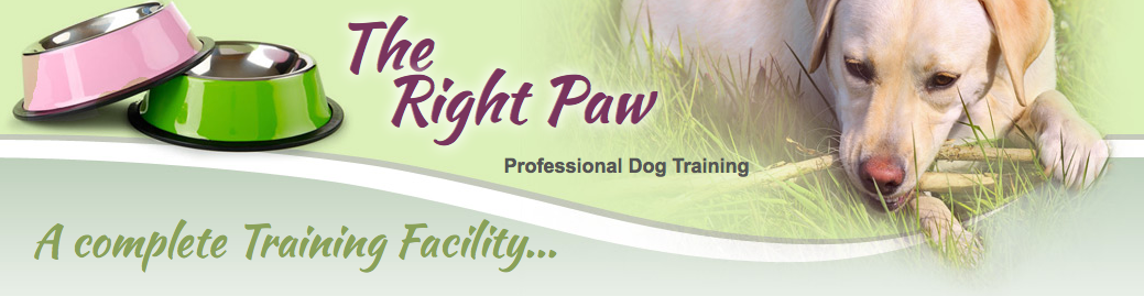 Right Paw banner